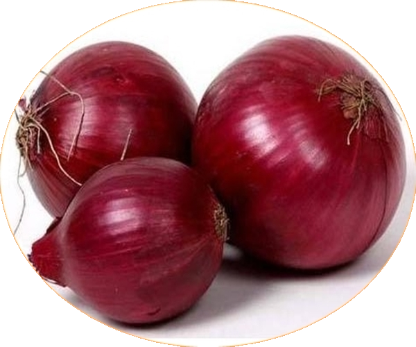 RED ONION 1309